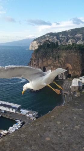 Il volo del gabbiano